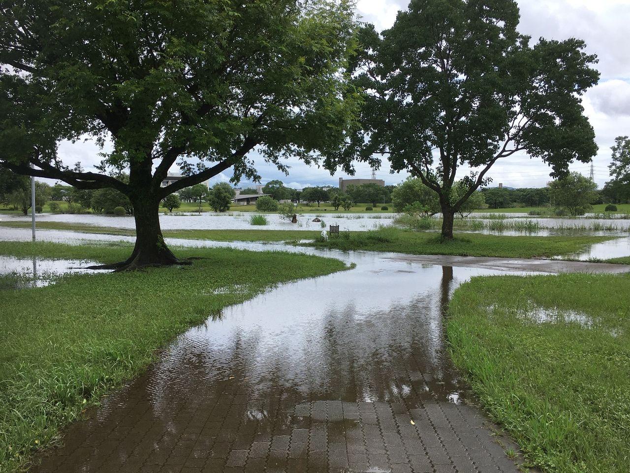 遊歩道も大雨で冠水した水前寺江津湖公園・広木地区