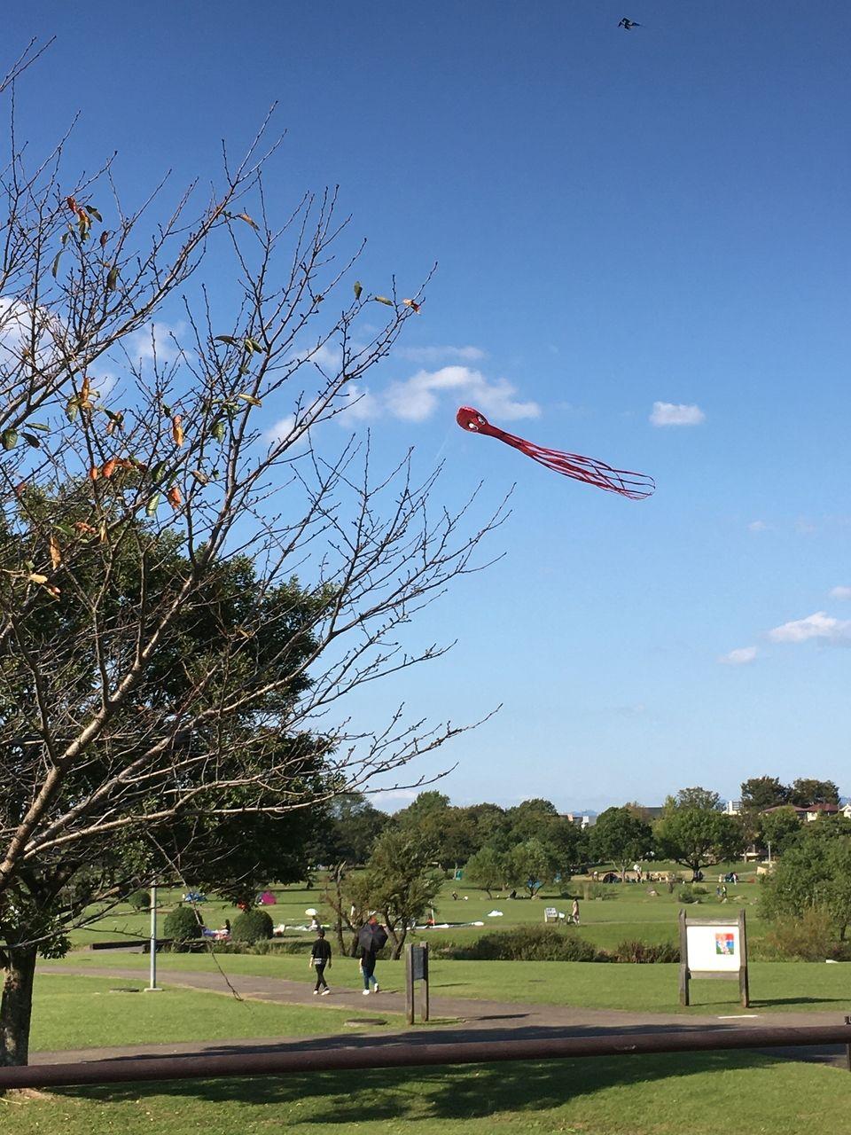 熊本市東区水前寺江津湖公園・広木地区さわやかな秋空に蛸の大凧舞う