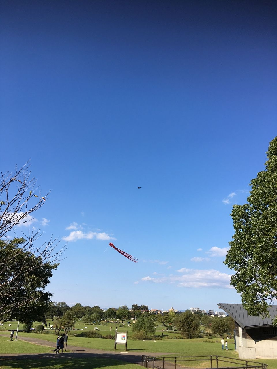 熊本市東区水前寺江津湖公園・広木地区 秋空に蛸の大凧舞う