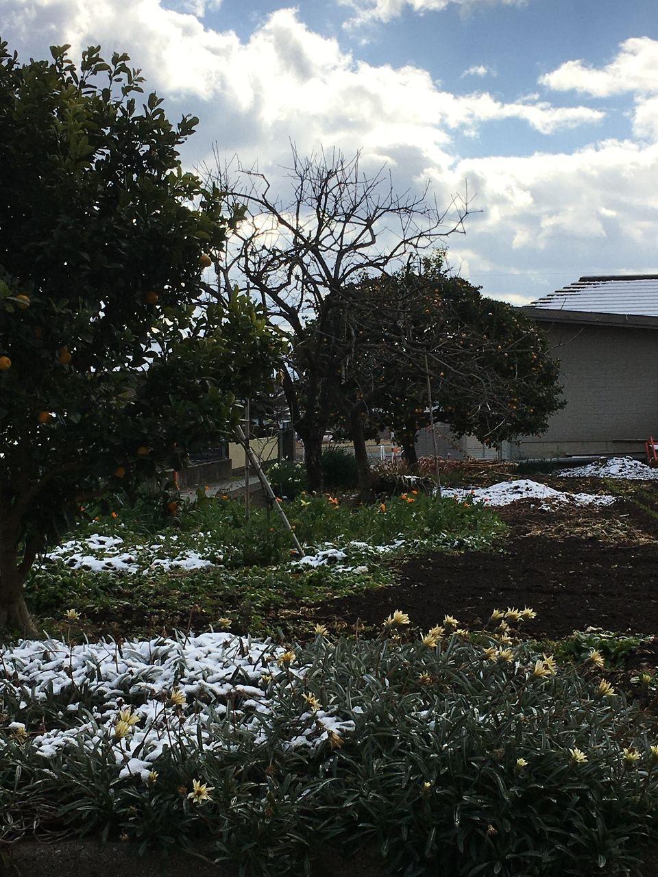 青空のもと朝まで積もっていた雪もお昼には残りわずかとなりました。