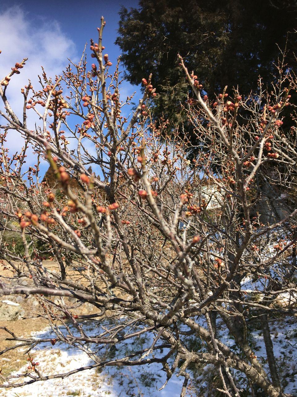 雪の中にも春の訪れを感じさせてくれる南阿蘇