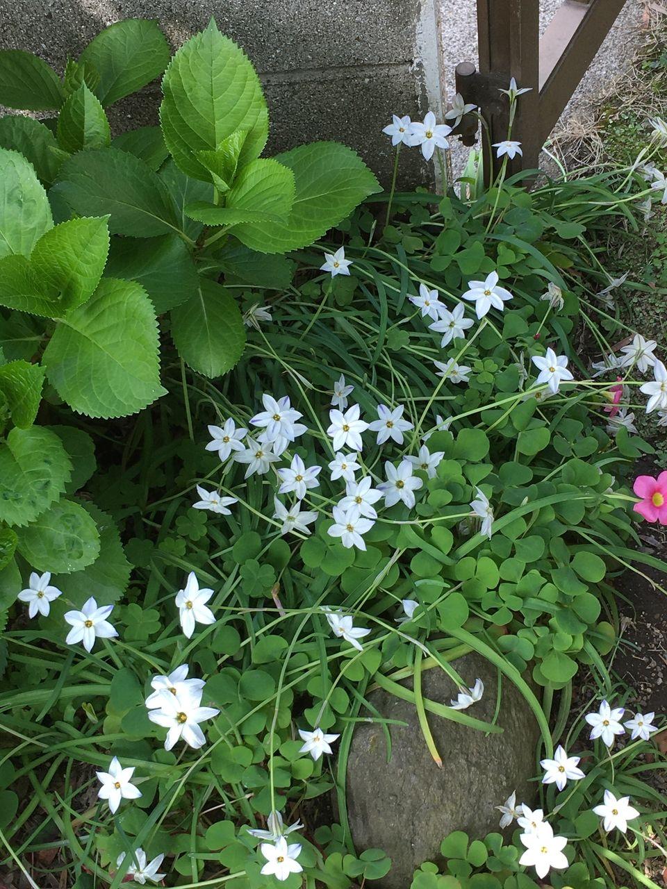 事務所の庭に咲く草花
