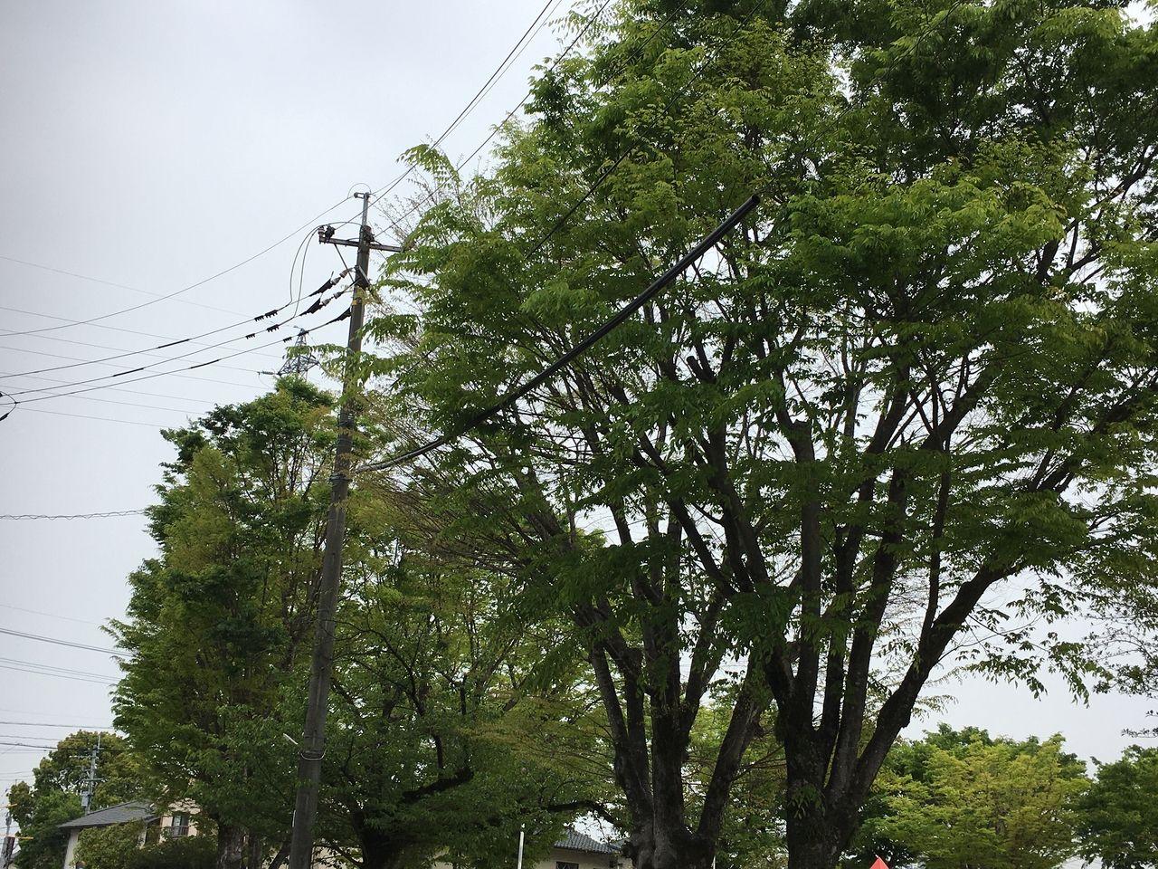 新緑のエネルギー溢れる木々