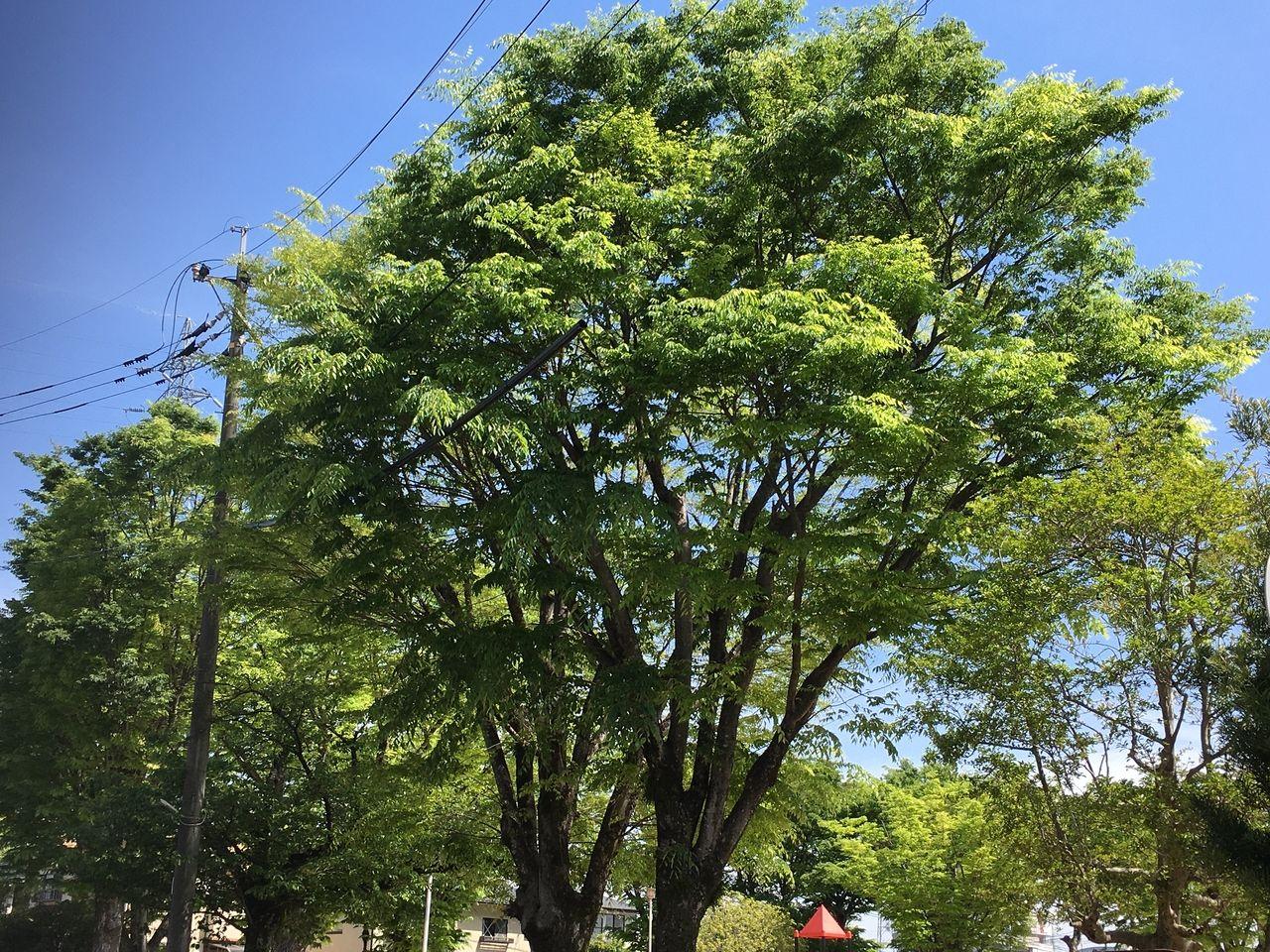 熊本市東区沼山津・沼山津公園の新緑が今年はもうまぶしいくらいです。