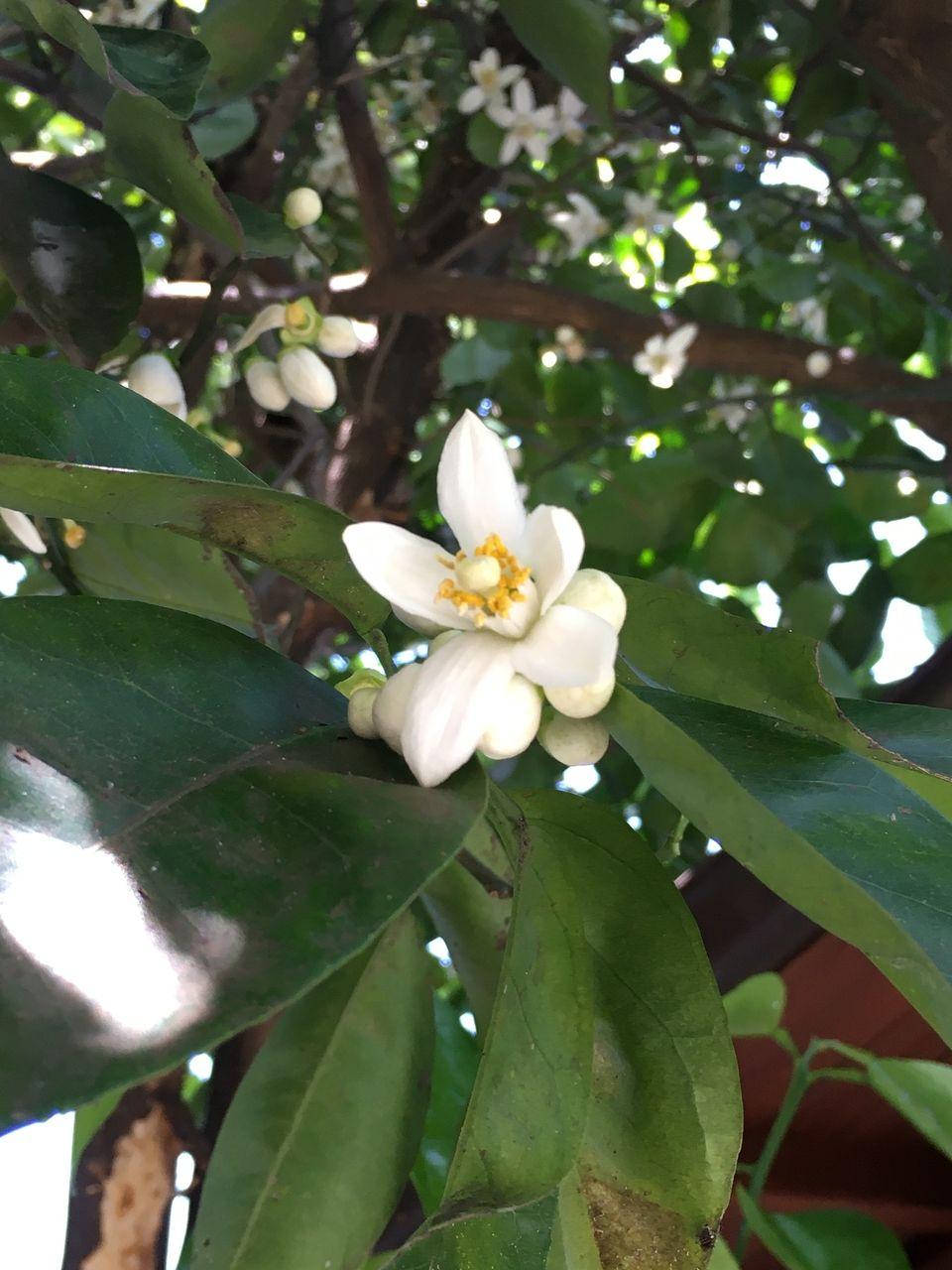 熊本市東区若葉・今年はどの木の花も昨年より早く咲きだしました。