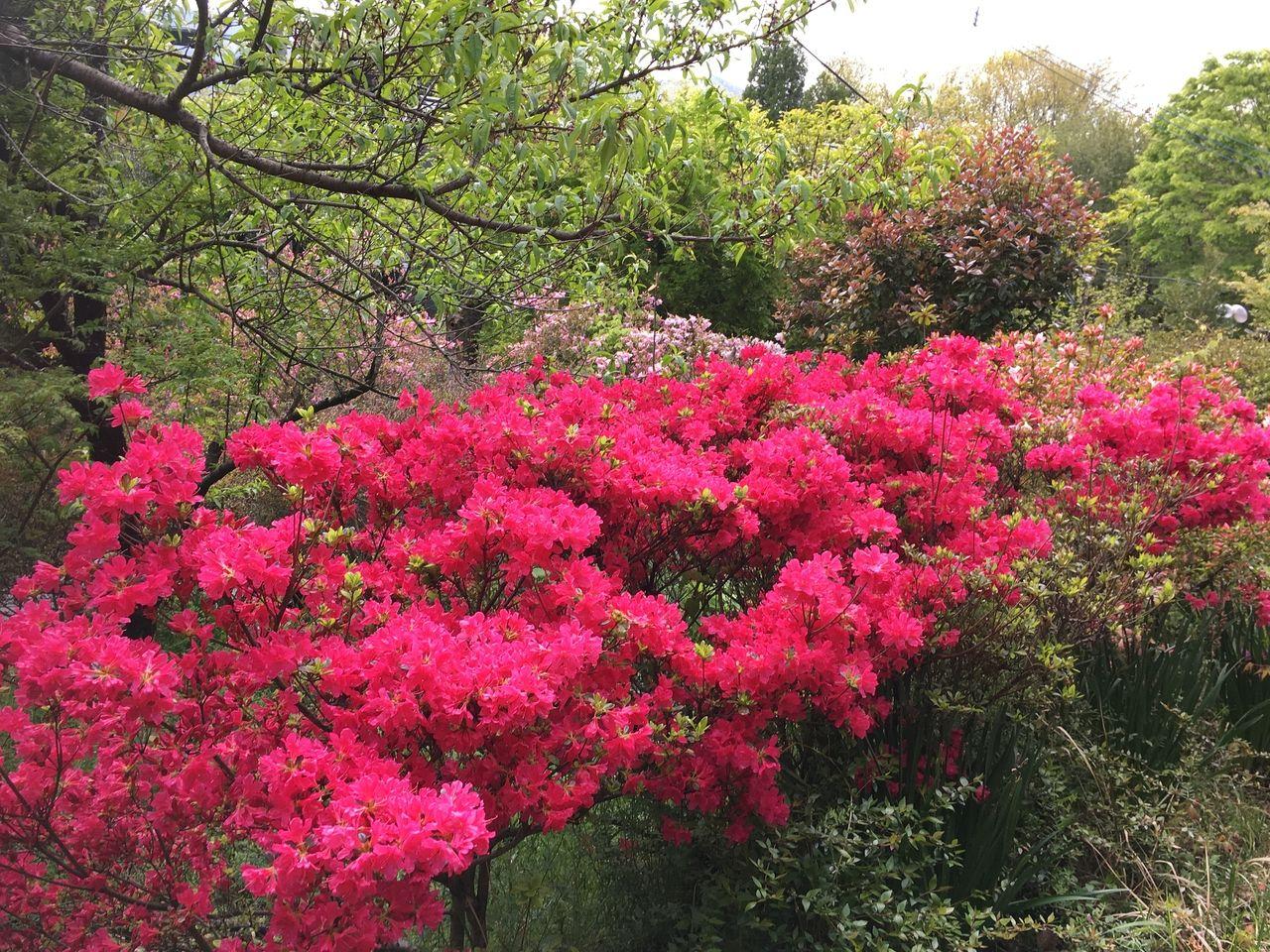 春の息吹に満ち溢れる南阿蘇