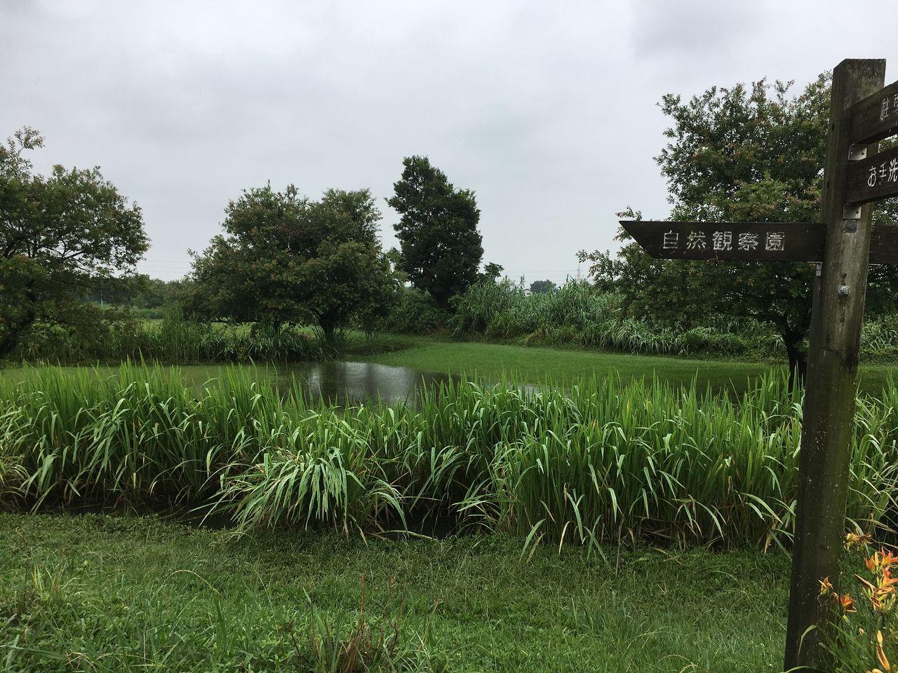まだかなり増水している湿地帯エリア