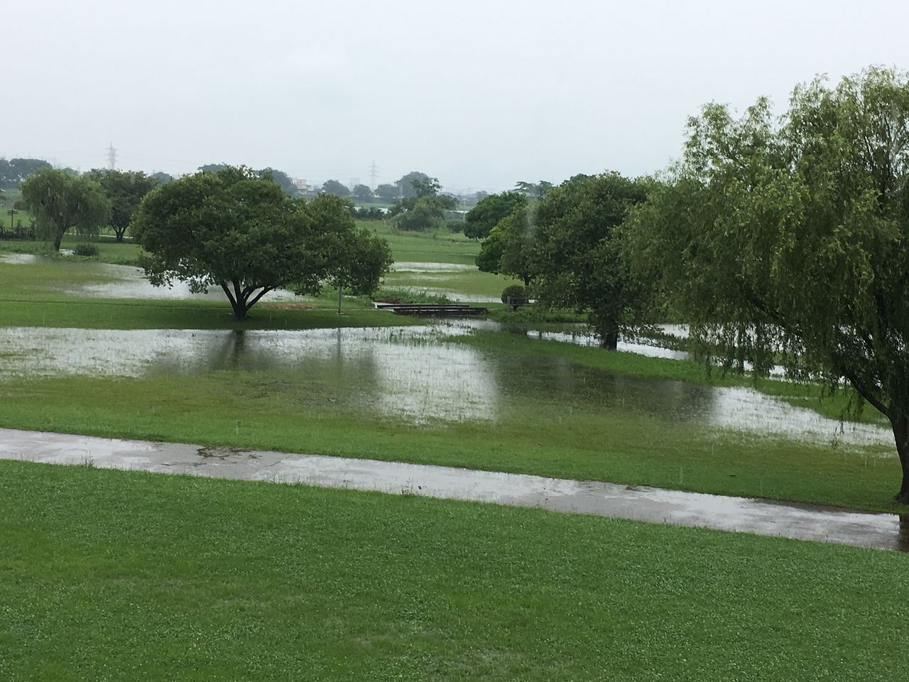 大雨の後、排水の状態がよくかなり水が引いた下江津公園とまだまだ冠水状態の田んぼ