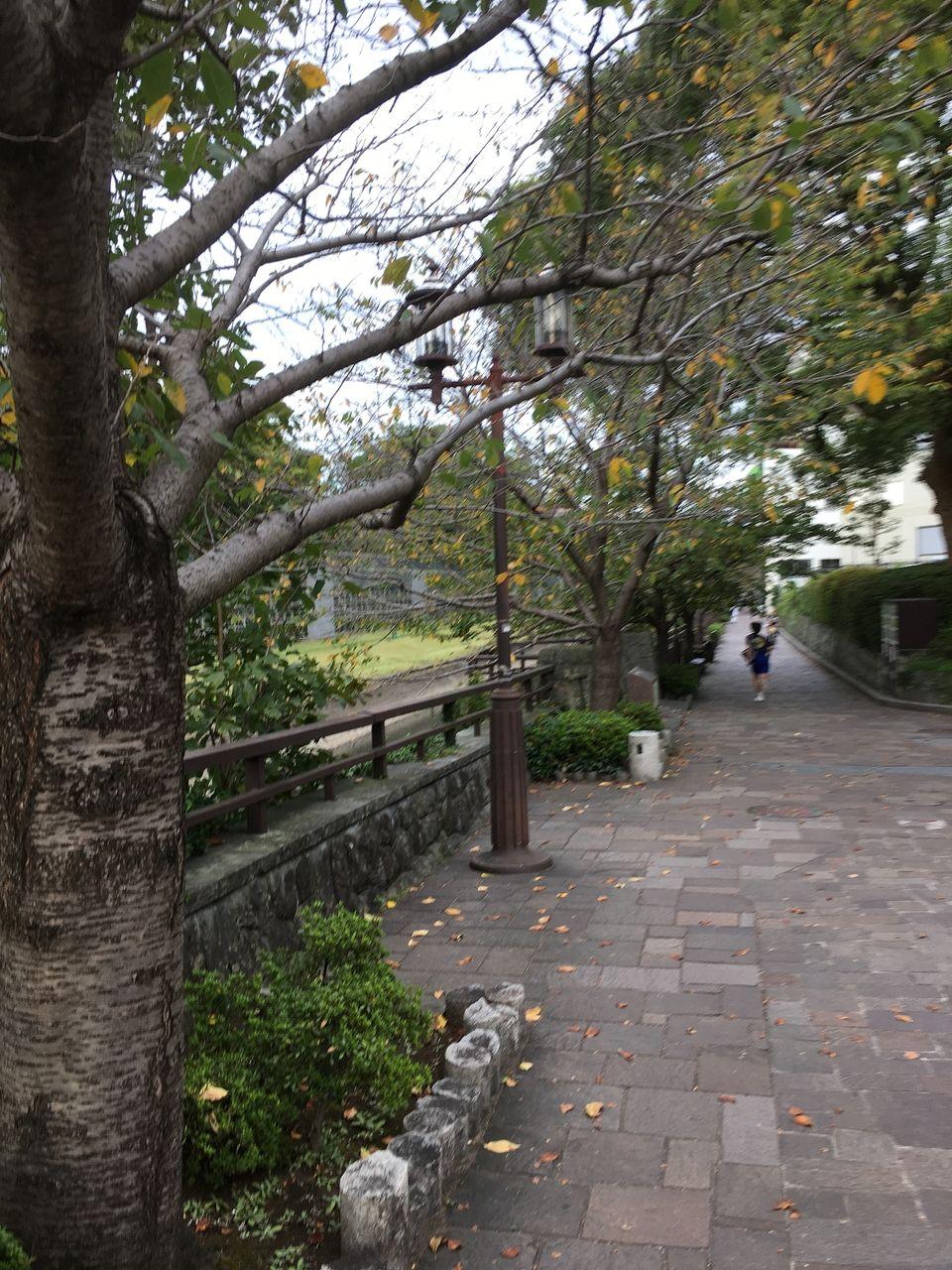 熊本城築城400年400日前の記念事業として平成17年11月記念植樹