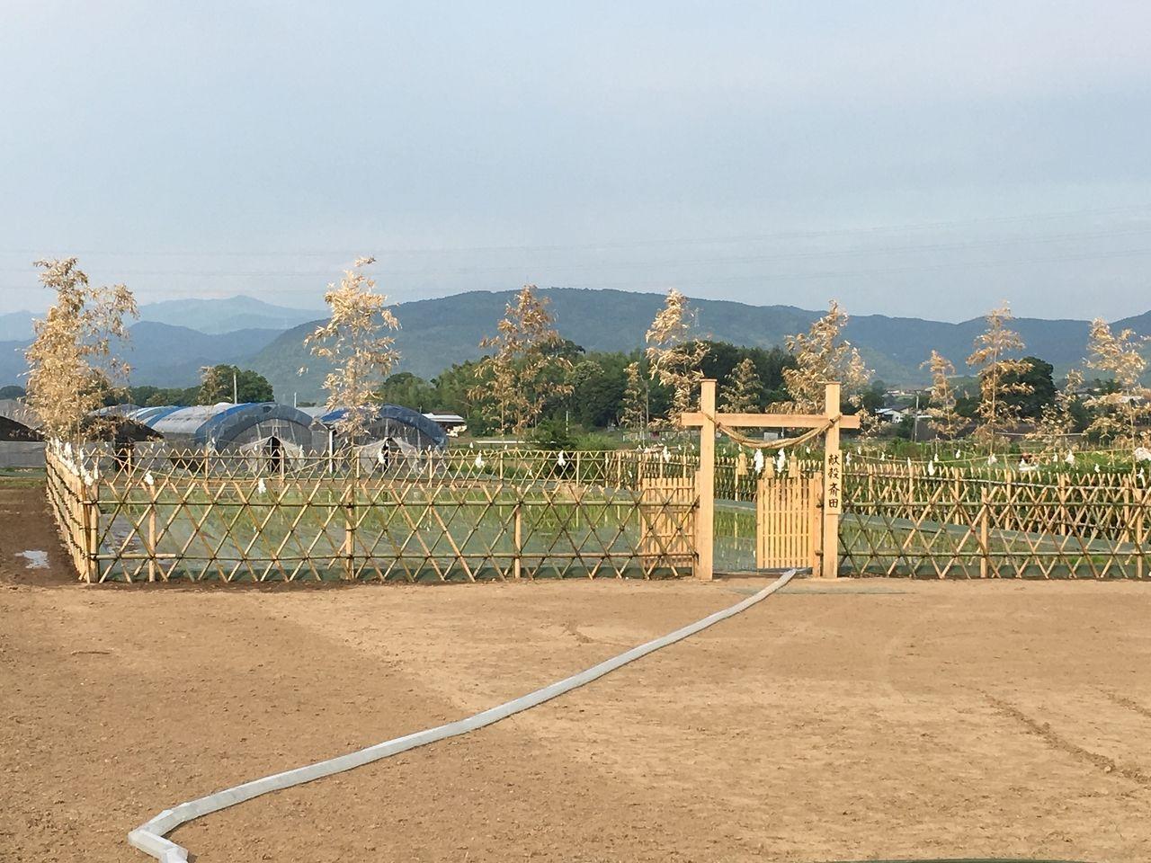 竹垣で区切られ回りの田畑とは一線きす献穀斎田