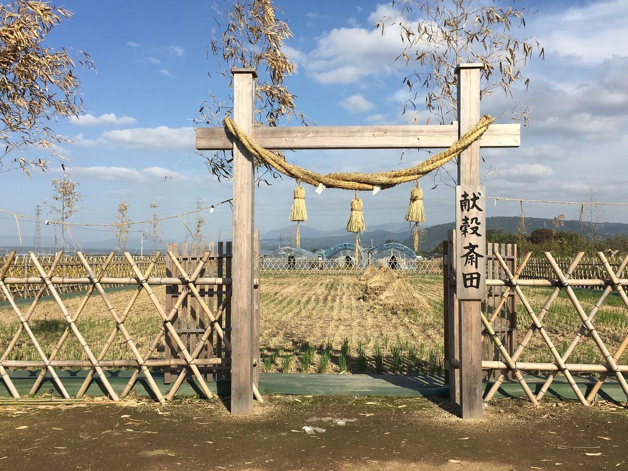 大注連縄の飾られる献穀斎田入口