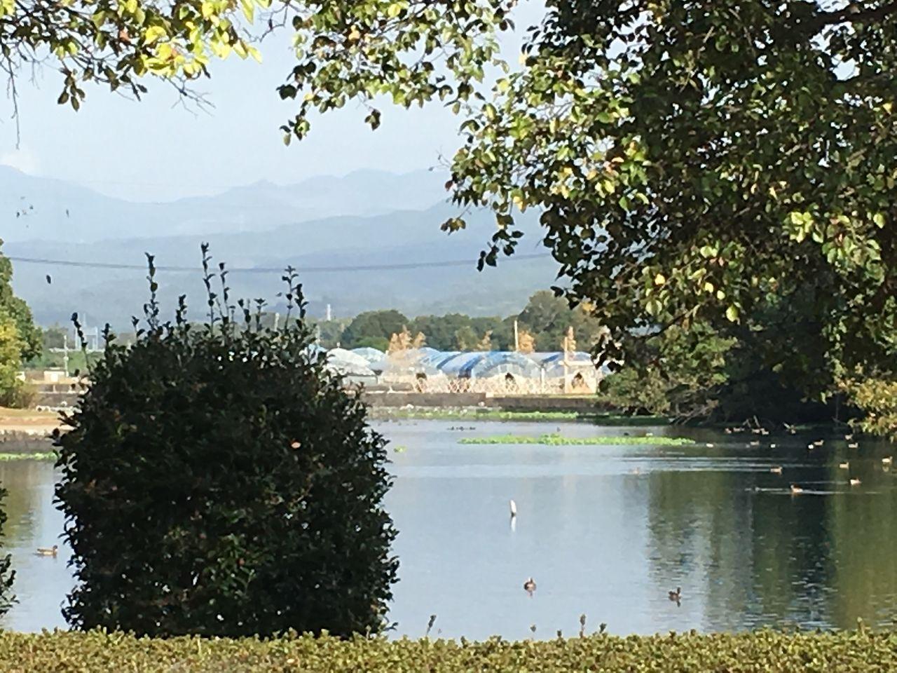 浮島周辺水辺公園 湧水の向うには献穀斎田を望む