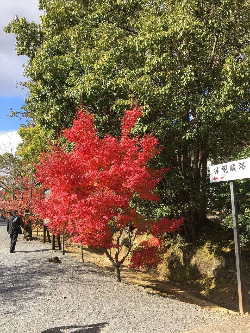 京都の日本料理「萬長」さんに行ってきました。