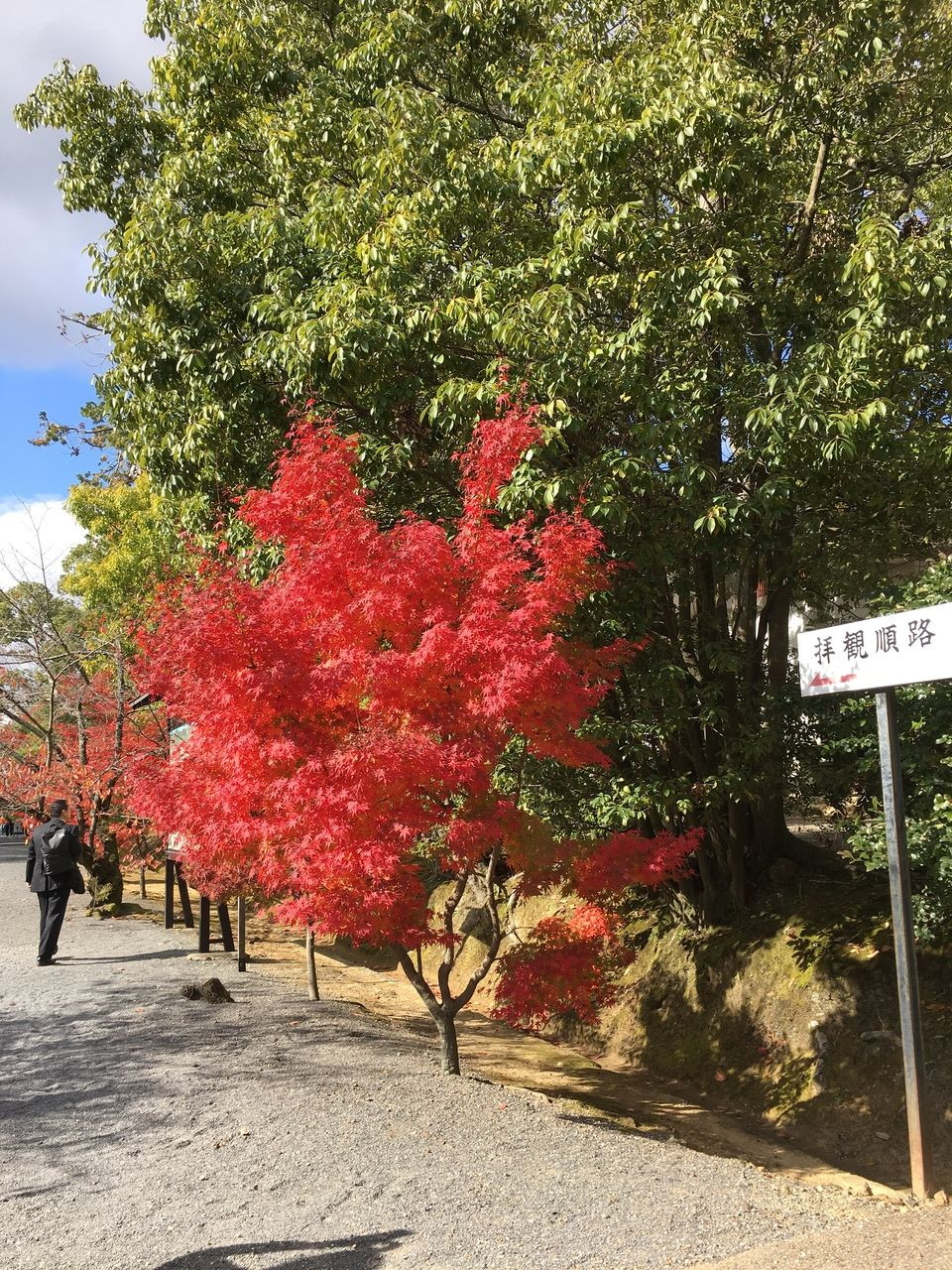 参道に入ってすぐ出迎えてくれる紅葉