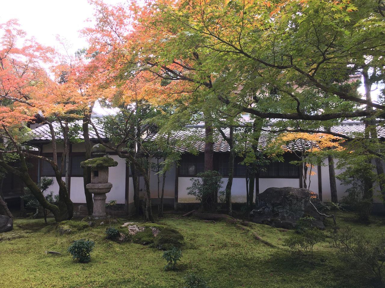 秋の京都 紅葉の仁和寺
