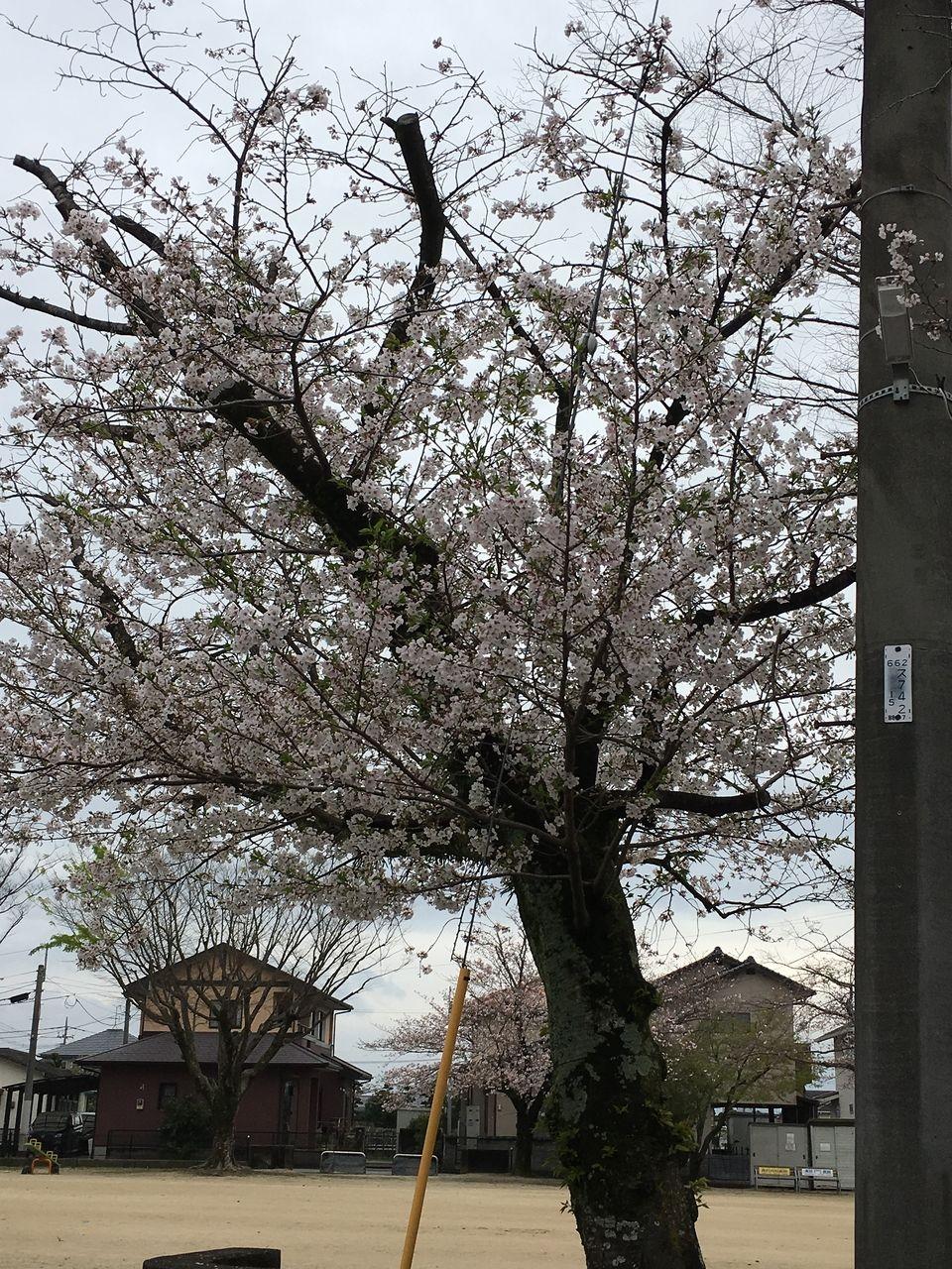日々変わる桜木が毎日楽しみです。桜木の変化に自然の営みの偉大さを感じると共に、日々に新た・日々に新たとなるよう成長していくようにと自然から激励されているようで、観ているだけで元気をいただきま…