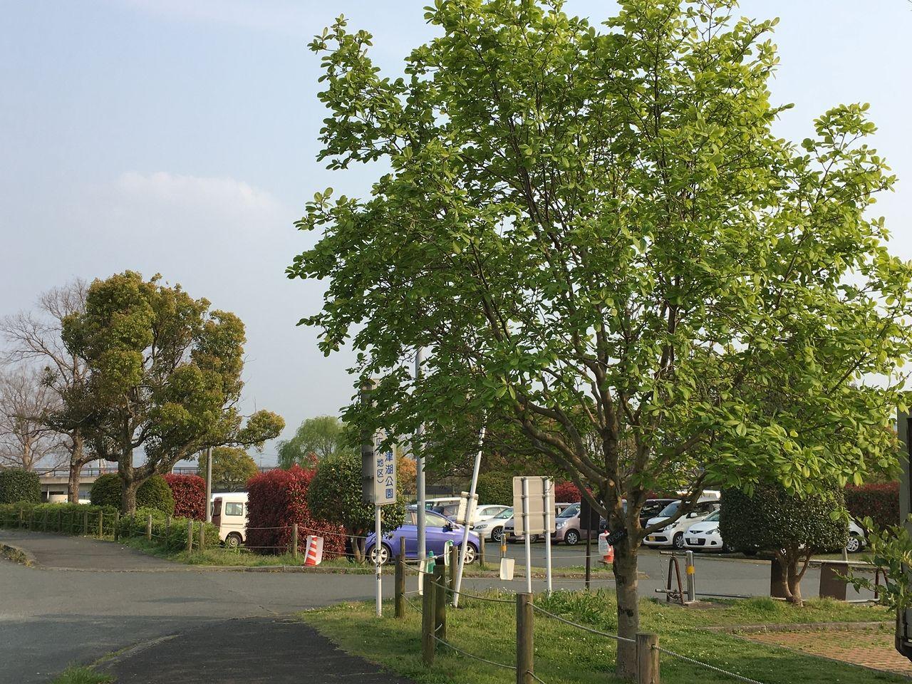 熊本市東区の水前寺江津湖公園・広木地区新緑の木々に囲まれている駐車場入口