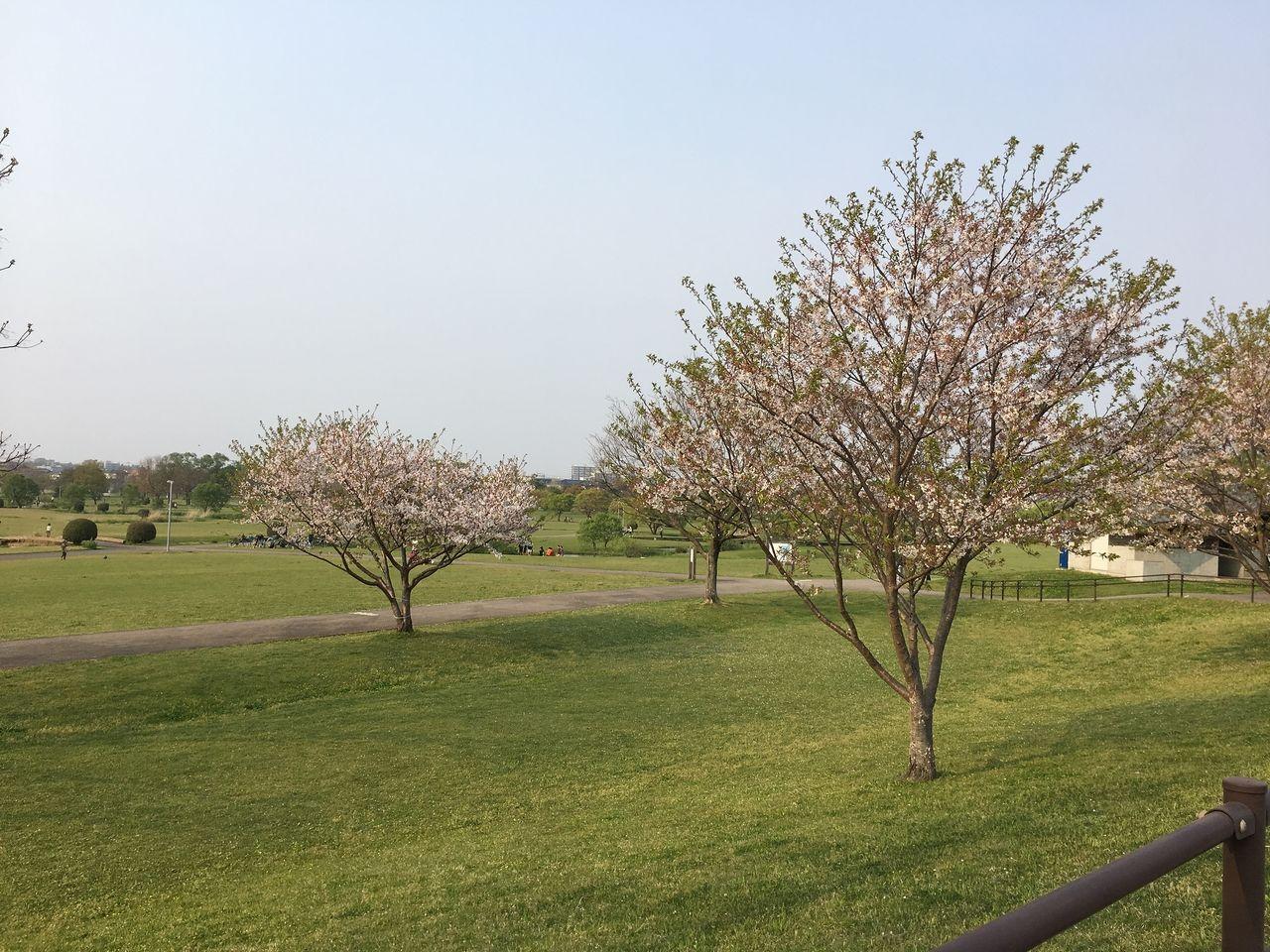 春の水前寺江津湖公園・広木地区