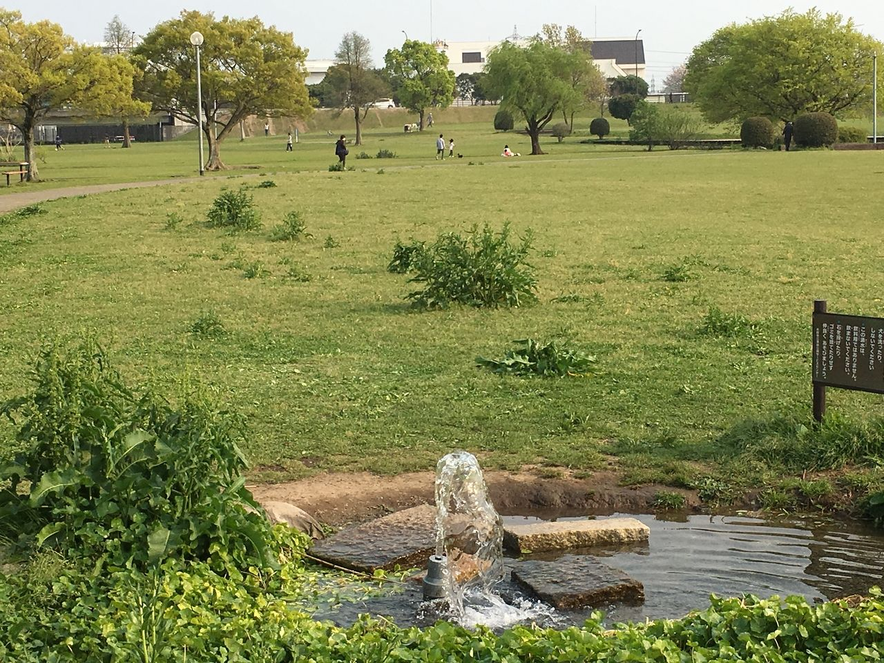 熊本市東区の水前寺江津湖公園・広木地区新緑で春爛漫