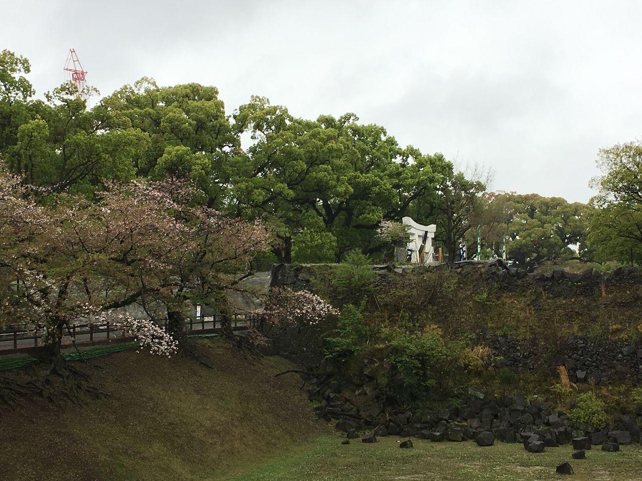 城内のいたる所で新緑の若葉が萌えいでています。
