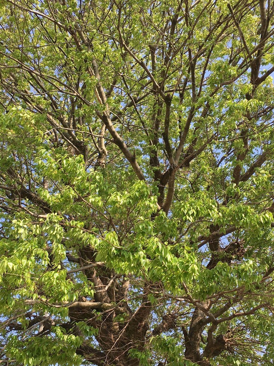 熊本市東区南町にある南町公園・まばゆいばかりの新緑です。