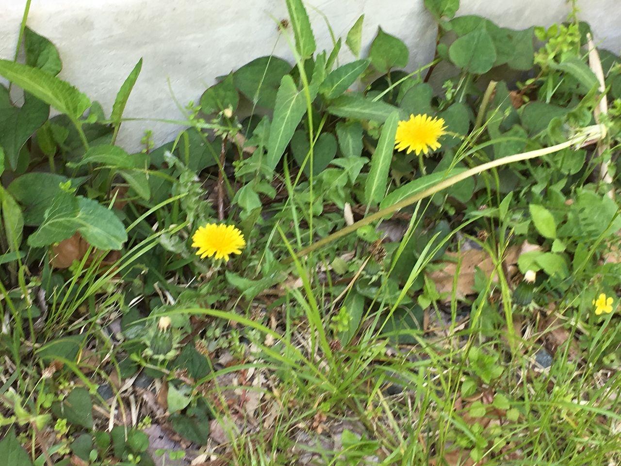 南阿蘇で春の訪れを伝えてくれる山野草