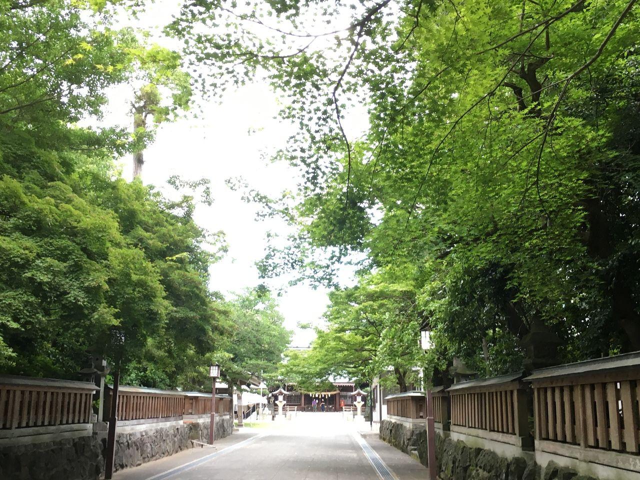 初夏の健軍神社