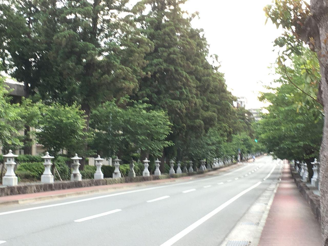 初夏の健軍神社参道