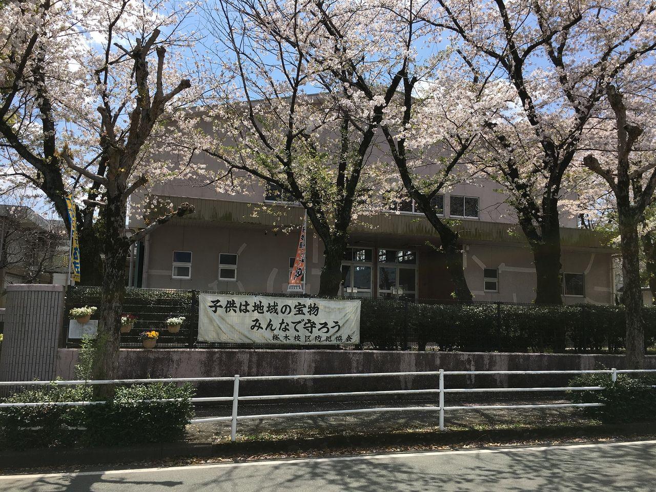 横断幕の上にも桜の咲き誇る桜木小学校