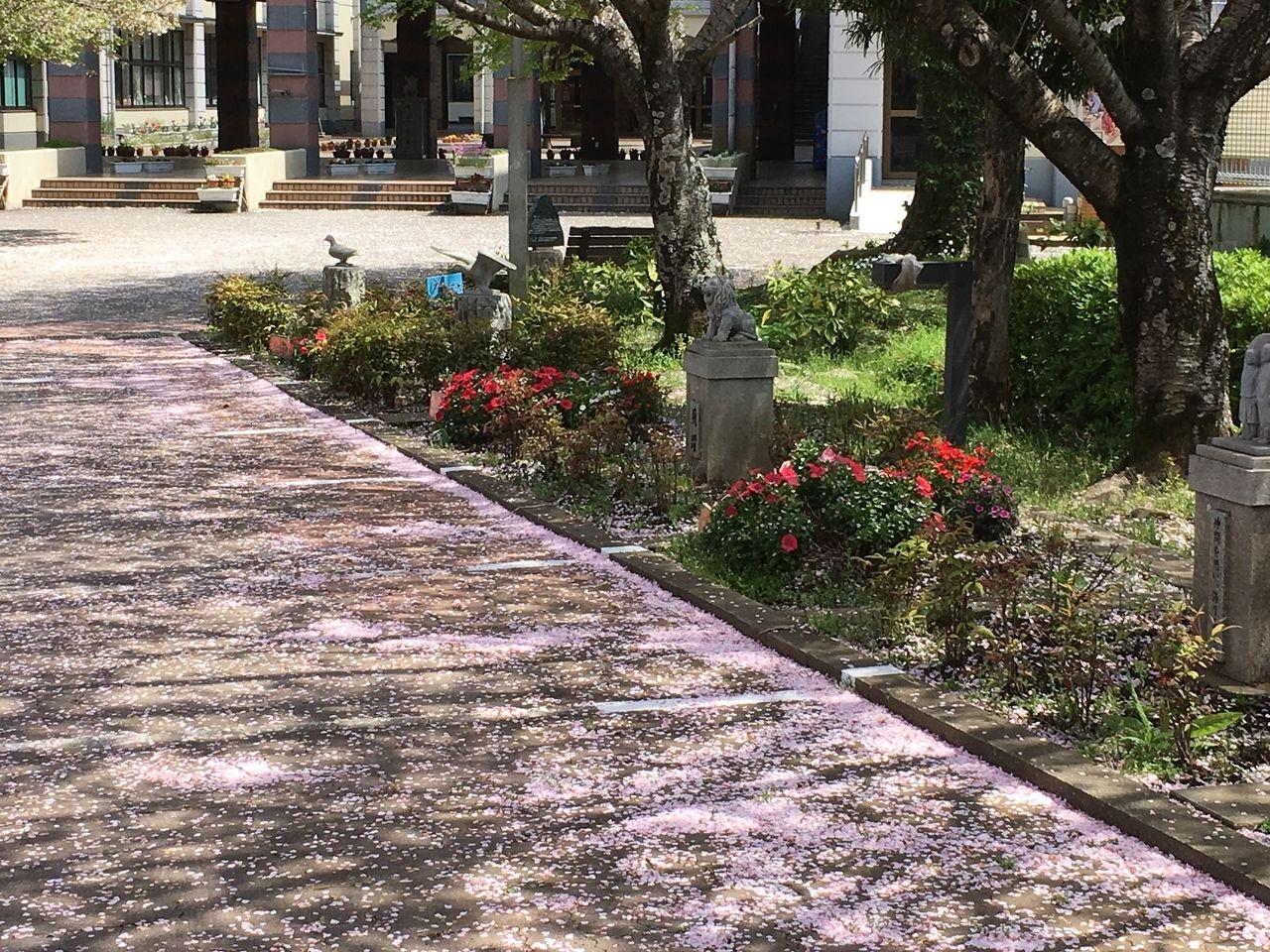 敷地内の桜木の下にある学級花壇