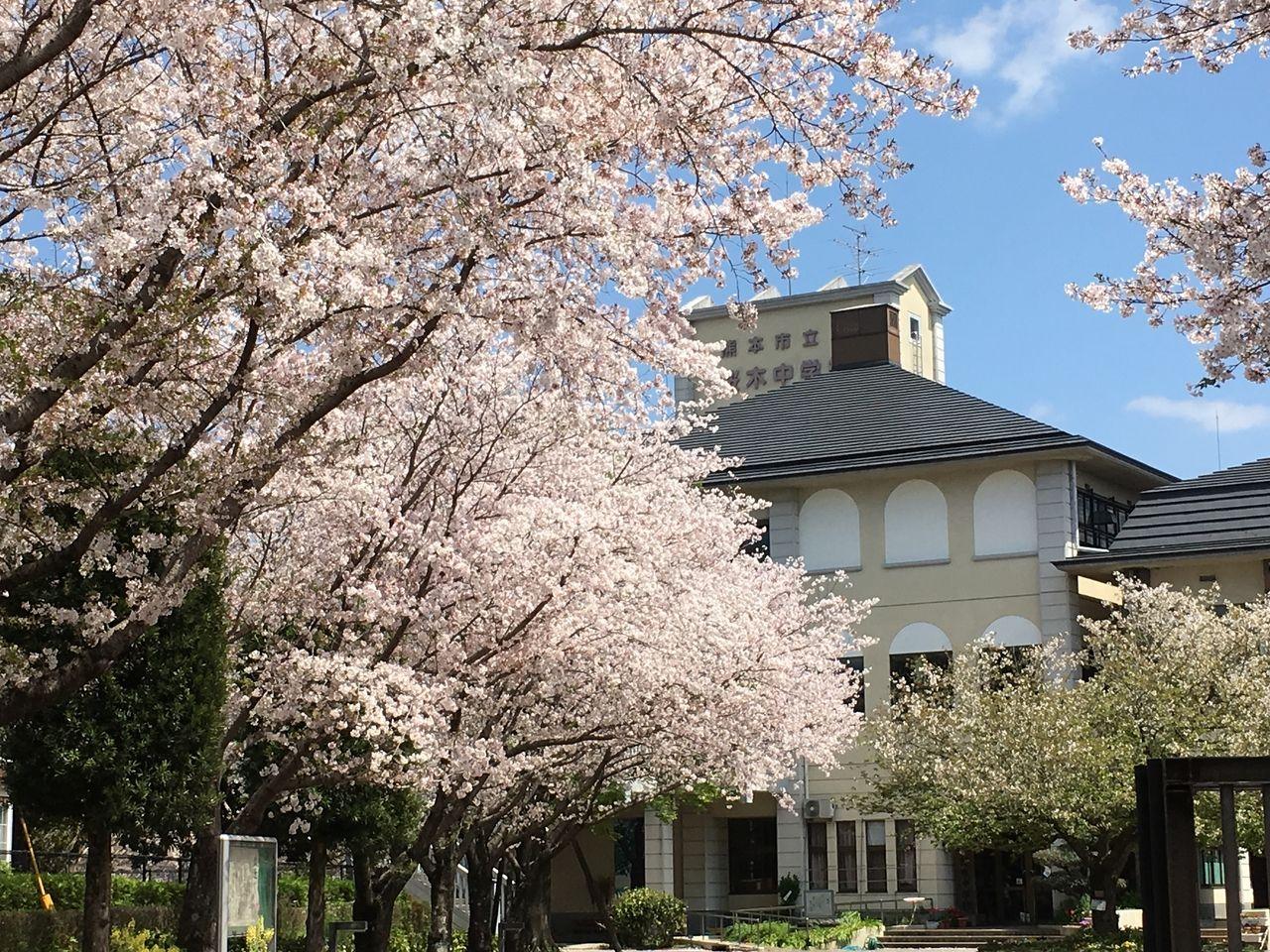 満開のさくらが出迎えてくれる桜木中学校校舎玄関