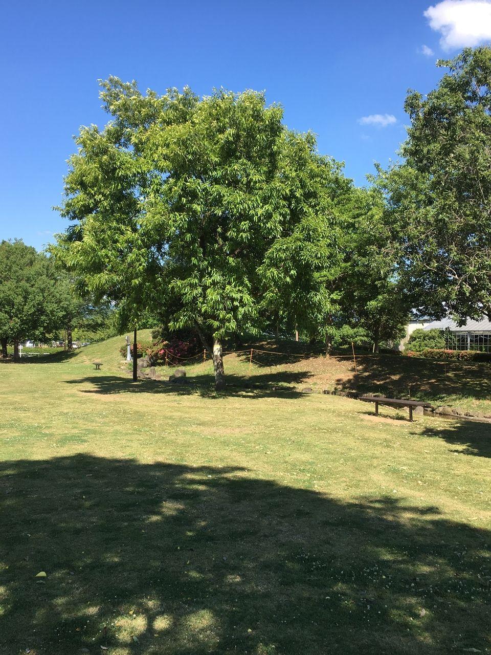 青空のもと広場にも木蔭のある初夏の秋津3丁目公園