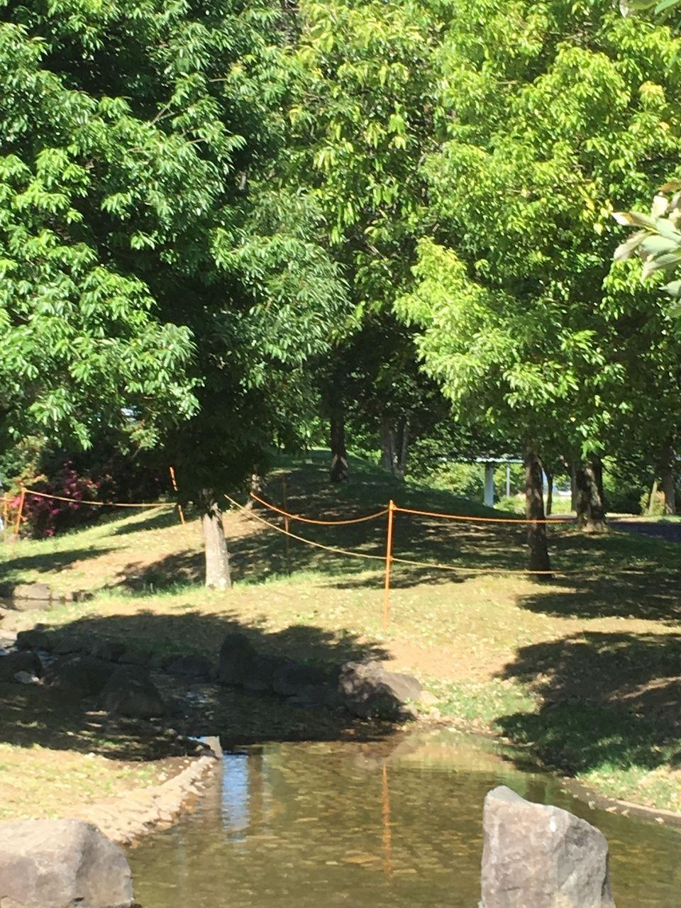 初夏の眩しい新緑と涼しげな水辺のある初夏の秋津3丁目公園