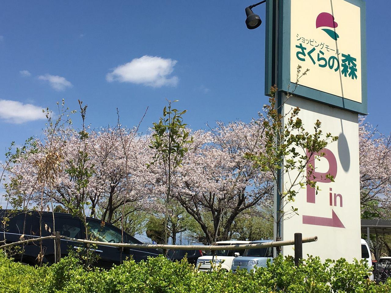 ショッピングモールさくらの森はその名が示すとおり桜の花が咲き誇っているショッピングモールです。